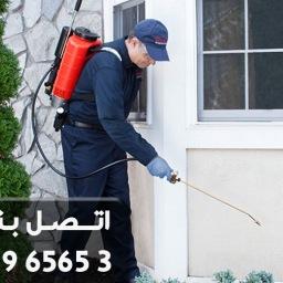التخلص من اخطر الحشرات (البق) – شركة ابادة حشرات
